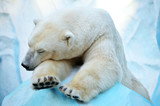 Спящий медведь.