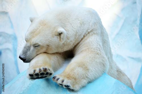 Tuinposter Ijsbeer Спящий медведь.