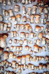 Mushrooms on blanket