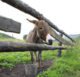 Donkey in the summer aviary. poster