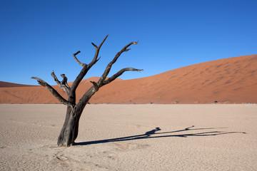 Namibia Valle della morte