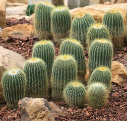 closeup of photo, cactus kind succulent plant
