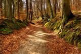 Krajobraz jesienny, las
