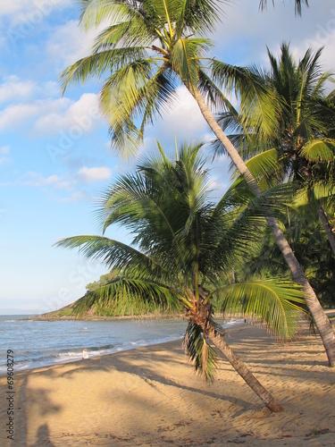 canvas print picture feiner sandstrand mit palmen