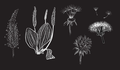 wild herbs sketches isolated on dark grey background