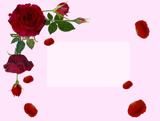 frame from dark red roses and petals