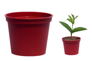 flowerpot and young plant