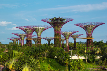 Iron Supertrees in Gardens by the Bay in Singapore