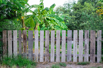 Wooden Picket fence garden
