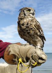 Owl on hand