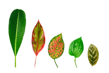 leafs isolated on white