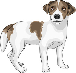 vector Jack Russell Terrier