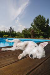 Hund liegt bei Swimming Pool