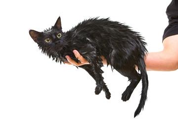 Cute black soggy cat after a bath