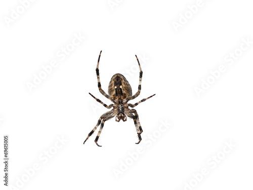 cross spider - 69615005