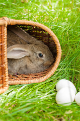 Easter bunny with eggs in basket with grass