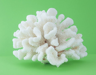 coral isolated