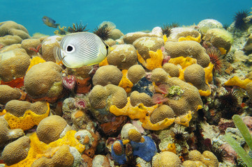 Colorful coral reef under water of Caribbean sea
