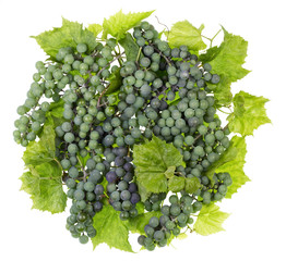 Green sweet grapes ball