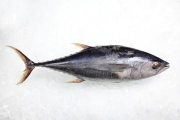 Tuna Fish on Ice background