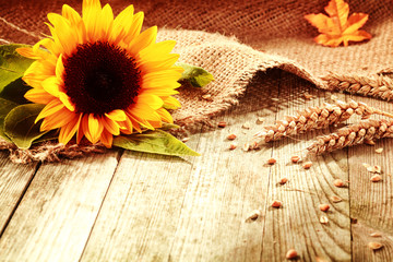 Rustic background with a sunflower and wheat