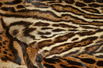 pelliccia di felino esotico