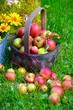 canvas print picture - Äpfel im Korb