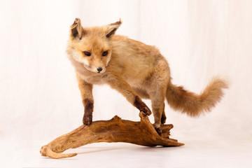 ein Fuchs auf einem Holzstück
