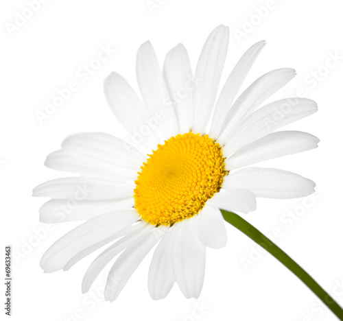 Foto op Canvas Madeliefjes Chamomile Flower