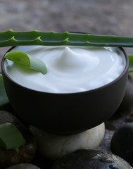 cosmetic cream lotion with natural green fresh aloe vera