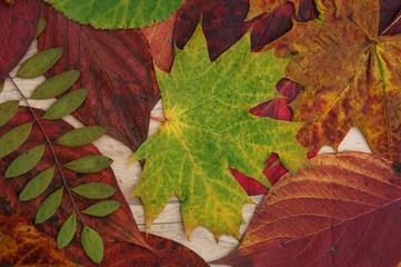 Bunte Herbstblätter - Herbstlaub - Herbstlicher Hintergrund