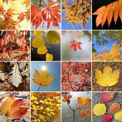 Collage - Blätter in Herbstfarben