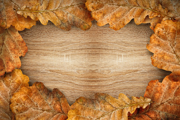 Dry oak leaves as frame
