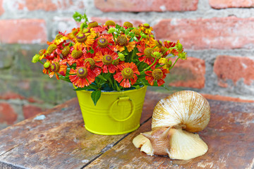 Bouquet of red flowers and a giant snail (Achatina reticulata) o