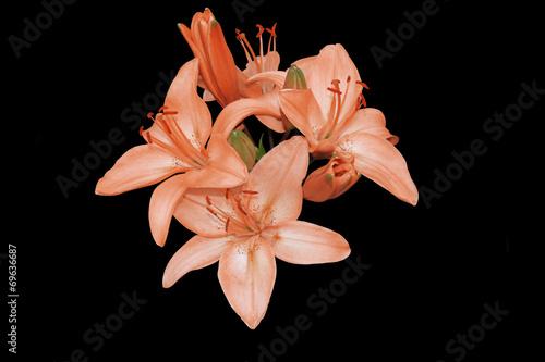 Foto op Canvas Lotusbloem Красные лилии на черном фоне