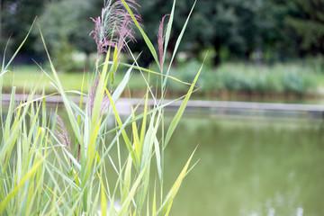 kleiner See im Grünen