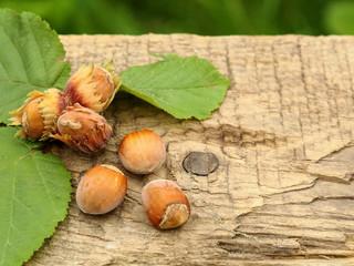 freshly picked hazelnuts on lying on the old board