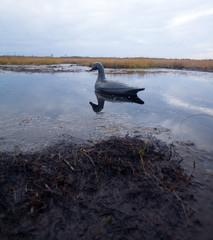 black hunting profile of a goose on a bog
