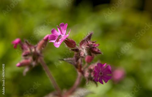 canvas print picture Belles fleurs violettes