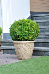 plant in a ceramic pot adorns the entrance to the hotel