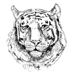 Artwork tiger, sketch black and white drawing - 69641832
