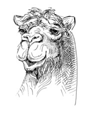 artwork camel, sketch black and white drawing