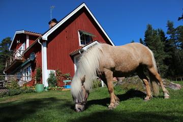 Islandpferd vor Schwedenhaus