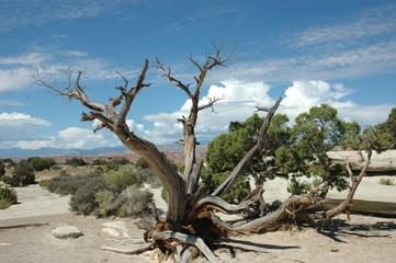 albero nel deserto verde
