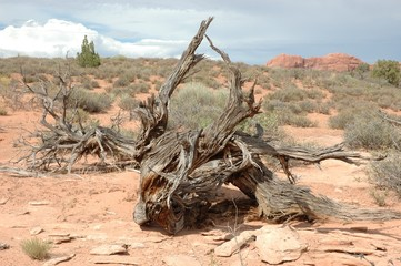 tronco secco nel deserto