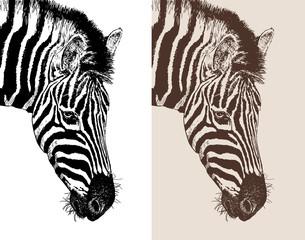 artwork head profile zebra