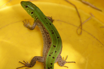 Picture of a young lizard