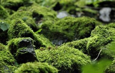 Bergbach mit moos bewachsenen Steinen