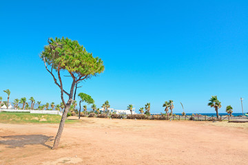 pine tree by the sea