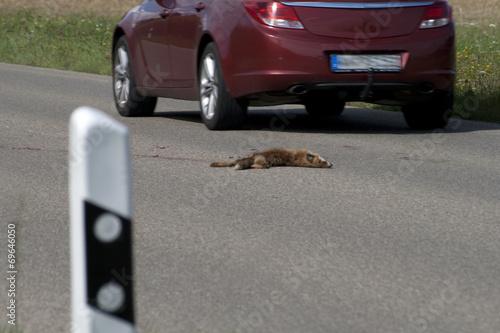 canvas print picture Überfahrener Fuchs auf der Straße